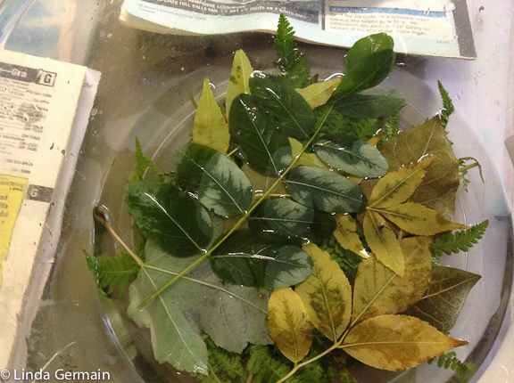 preserving leaves with glycerin and water