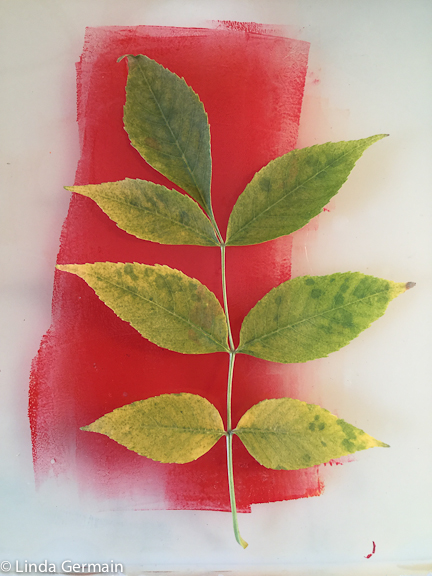leaf ready to print on gelatin plate